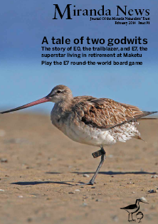 Pukorokoro Miranda Shorebird Centre e7 godwit migration