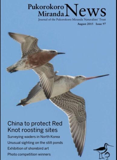 Pukorokoro Miranda Shorebird Centre Red knot China migration