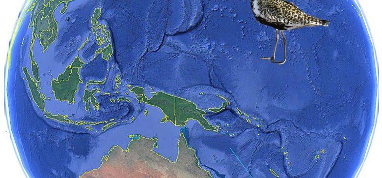 Follow the Kuriri on Google Earth