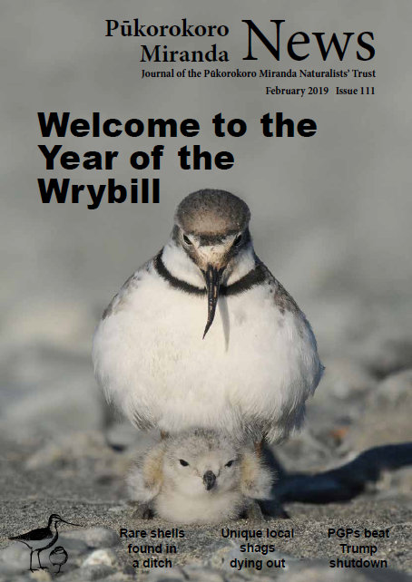 Pukorokoro Miranda Shorebird Centre Wrybill News
