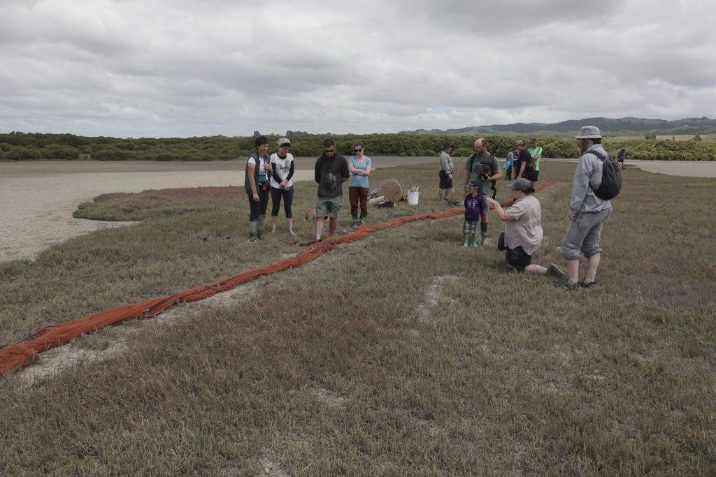 Cannon netting Pukorokoro Miranda Shorebird Centre