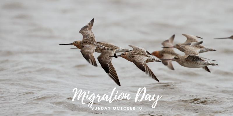 Shorebird Centre Migration Day 2021