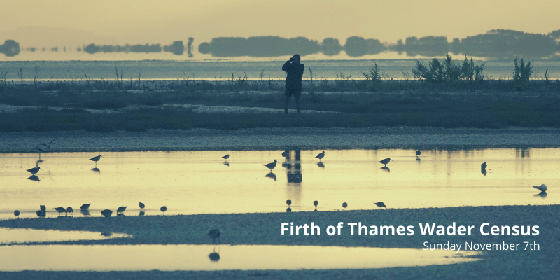 Firth of Thames Wader Census 2021